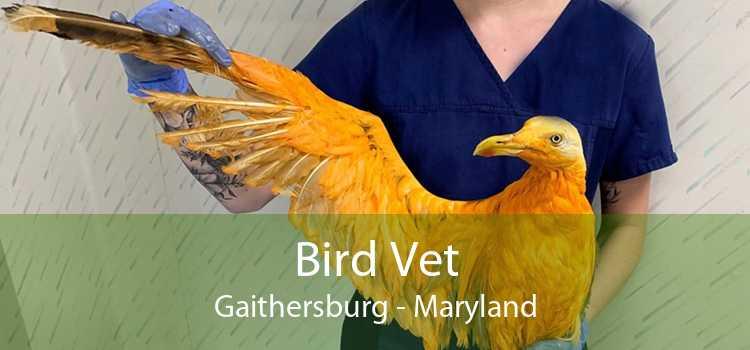 Bird Vet Gaithersburg - Maryland