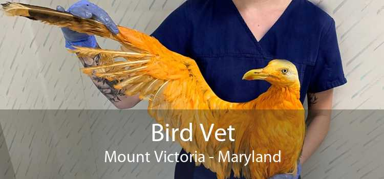 Bird Vet Mount Victoria - Maryland