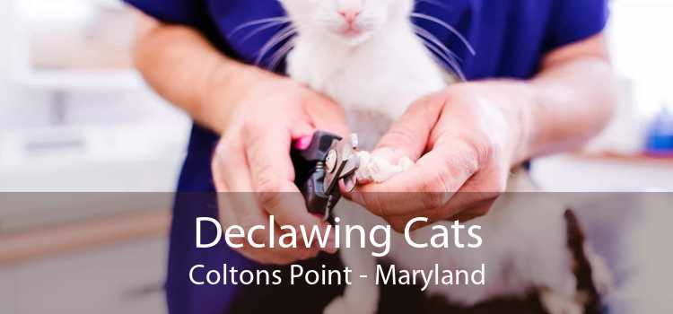 Declawing Cats Coltons Point - Maryland