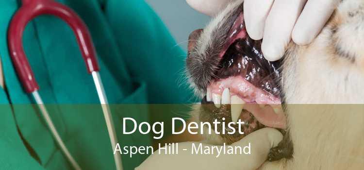 Dog Dentist Aspen Hill - Maryland