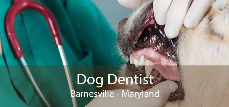 Dog Dentist Barnesville - Maryland