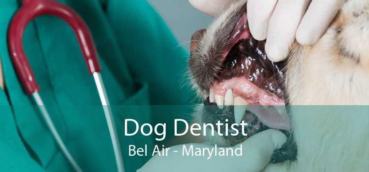 Dog Dentist Bel Air - Maryland