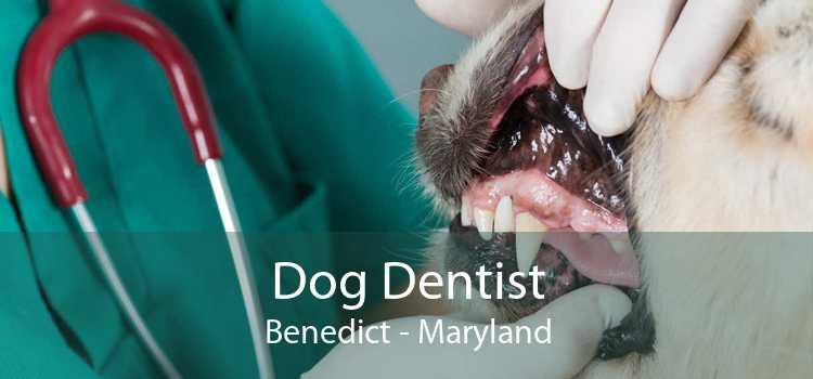 Dog Dentist Benedict - Maryland