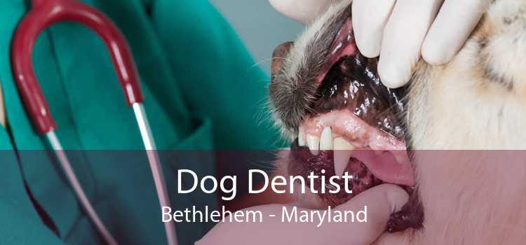 Dog Dentist Bethlehem - Maryland