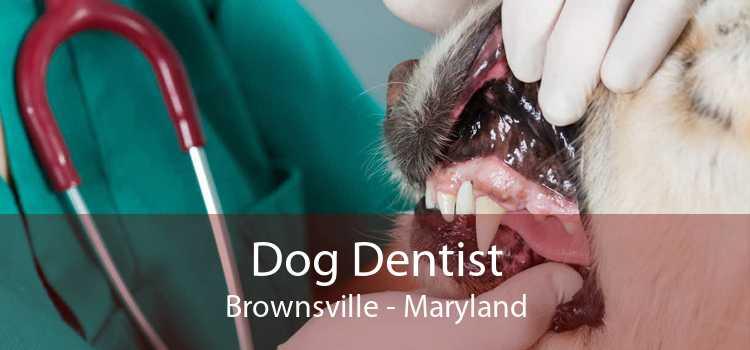 Dog Dentist Brownsville - Maryland