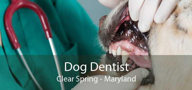 Dog Dentist Clear Spring - Maryland
