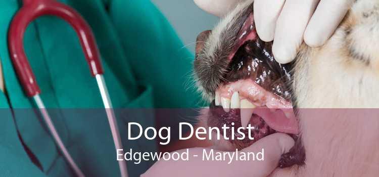 Dog Dentist Edgewood - Maryland