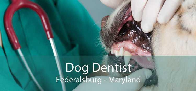 Dog Dentist Federalsburg - Maryland