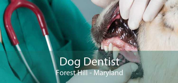 Dog Dentist Forest Hill - Maryland