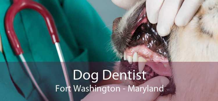 Dog Dentist Fort Washington - Maryland