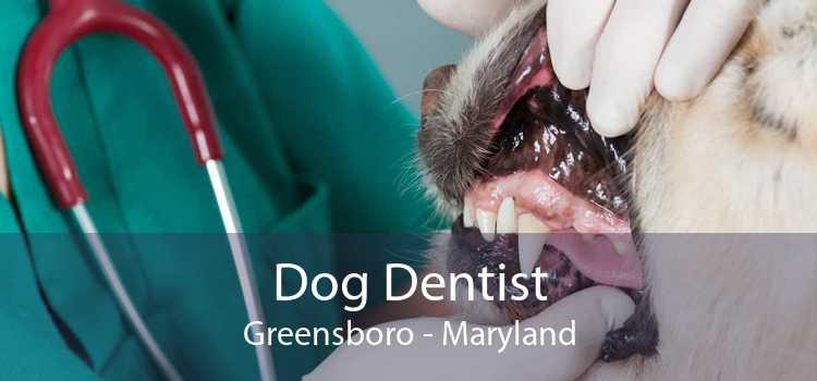 Dog Dentist Greensboro - Maryland