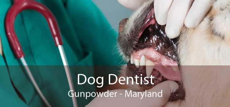 Dog Dentist Gunpowder - Maryland