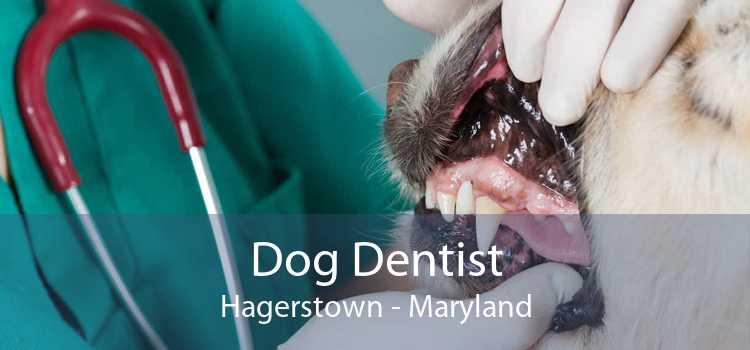 Dog Dentist Hagerstown - Maryland