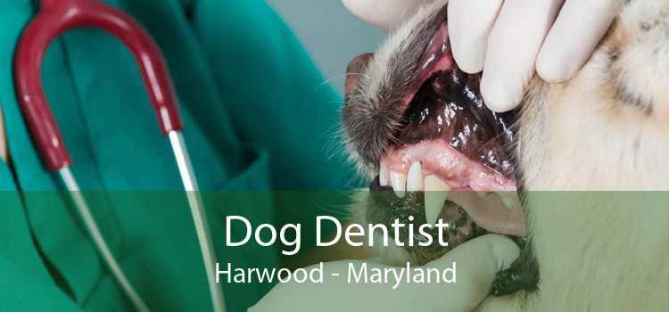 Dog Dentist Harwood - Maryland