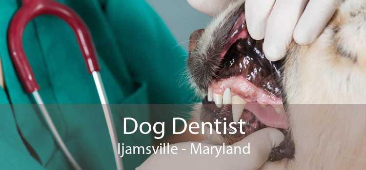 Dog Dentist Ijamsville - Maryland