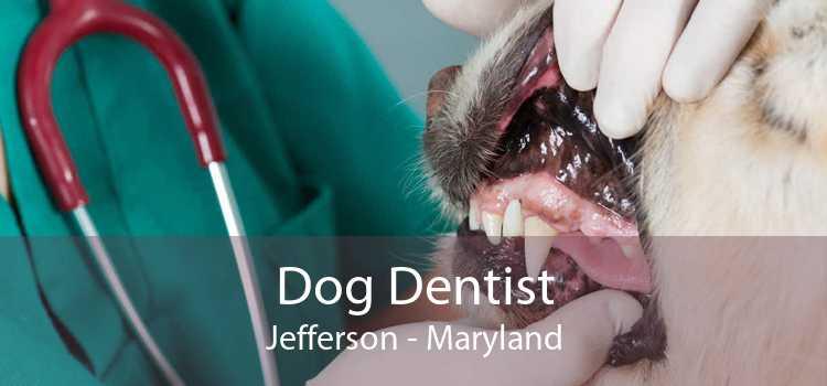 Dog Dentist Jefferson - Maryland