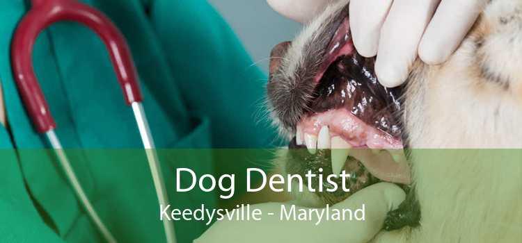 Dog Dentist Keedysville - Maryland