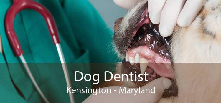 Dog Dentist Kensington - Maryland