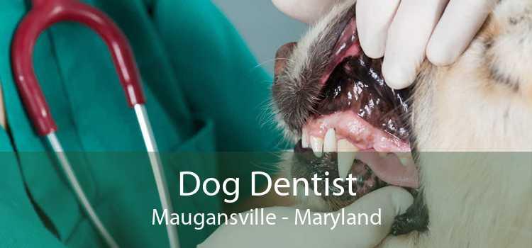 Dog Dentist Maugansville - Maryland