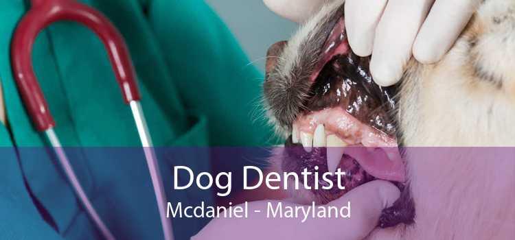 Dog Dentist Mcdaniel - Maryland