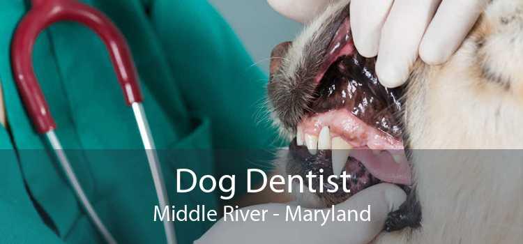 Dog Dentist Middle River - Maryland