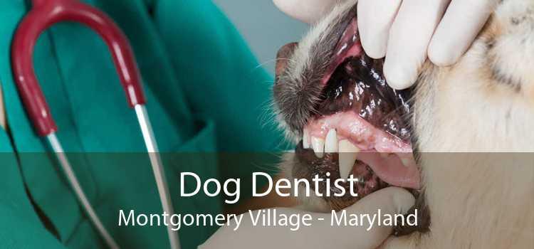 Dog Dentist Montgomery Village - Maryland