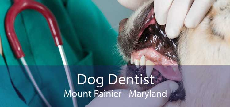 Dog Dentist Mount Rainier - Maryland