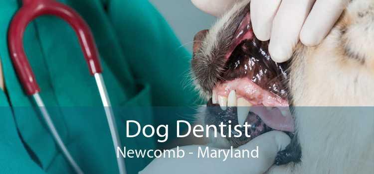 Dog Dentist Newcomb - Maryland