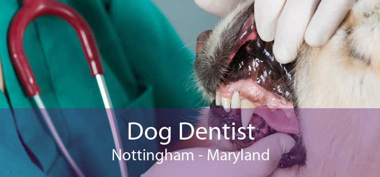 Dog Dentist Nottingham - Maryland