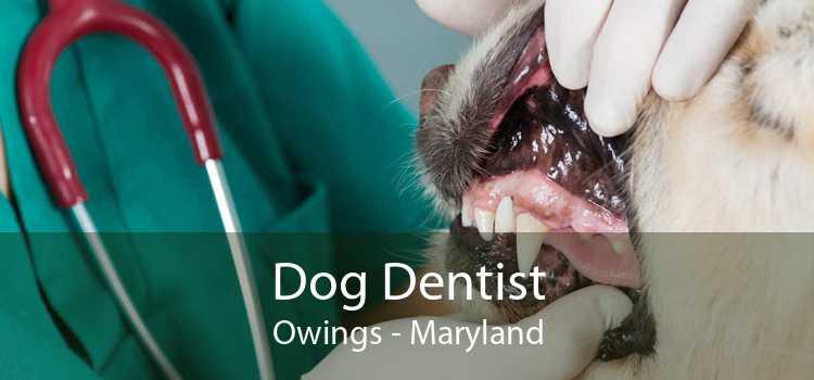 Dog Dentist Owings - Maryland