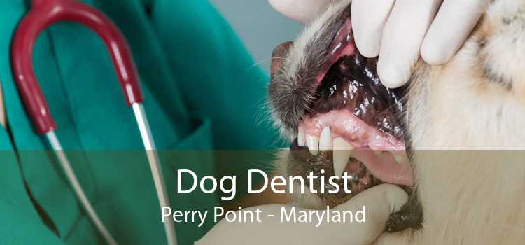 Dog Dentist Perry Point - Maryland