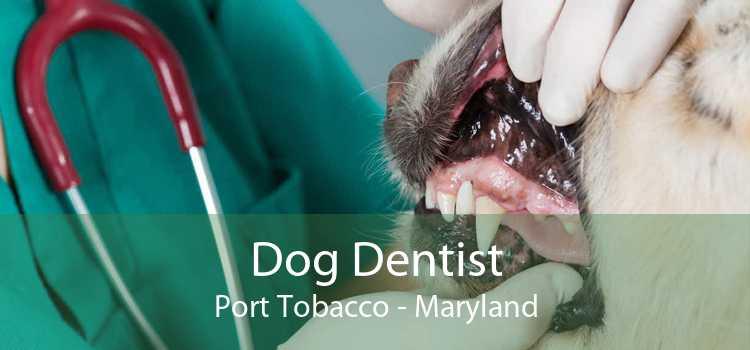 Dog Dentist Port Tobacco - Maryland