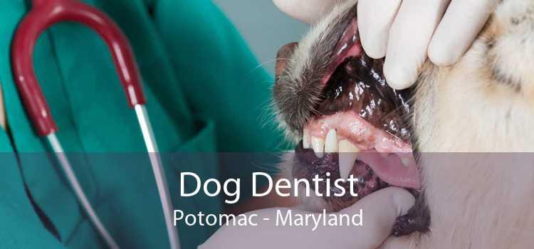 Dog Dentist Potomac - Maryland