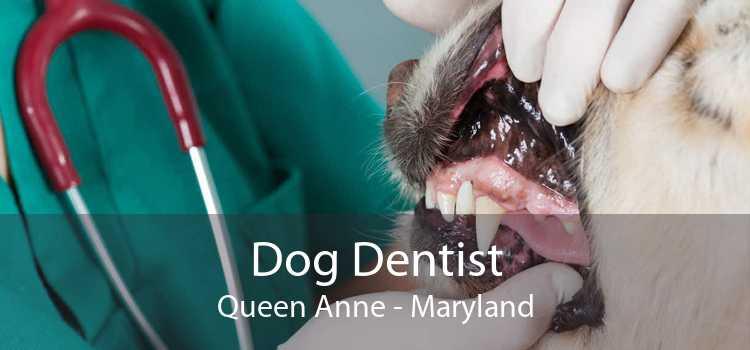 Dog Dentist Queen Anne - Maryland