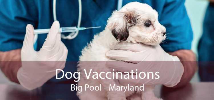 Dog Vaccinations Big Pool - Maryland