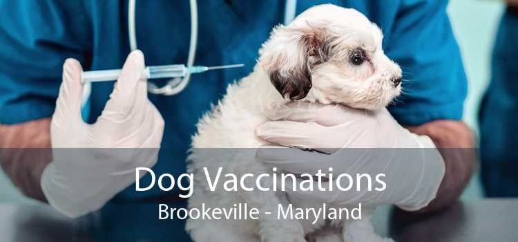 Dog Vaccinations Brookeville - Maryland