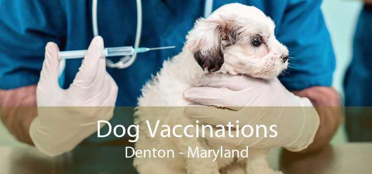 Dog Vaccinations Denton - Maryland