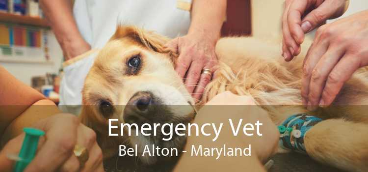 Emergency Vet Bel Alton - Maryland