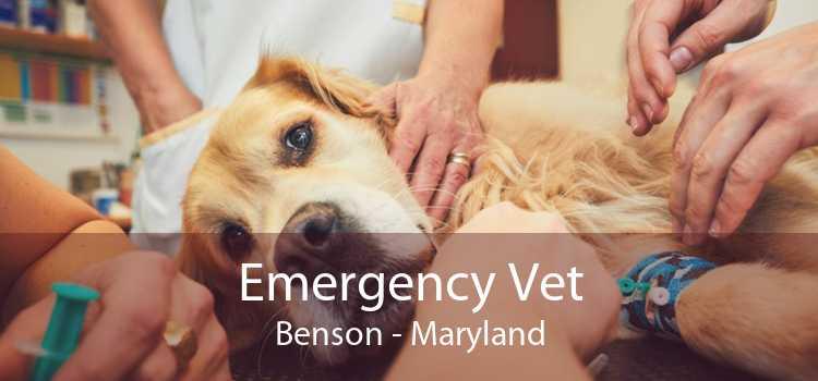 Emergency Vet Benson - Maryland