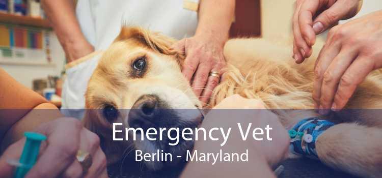 Emergency Vet Berlin - Maryland