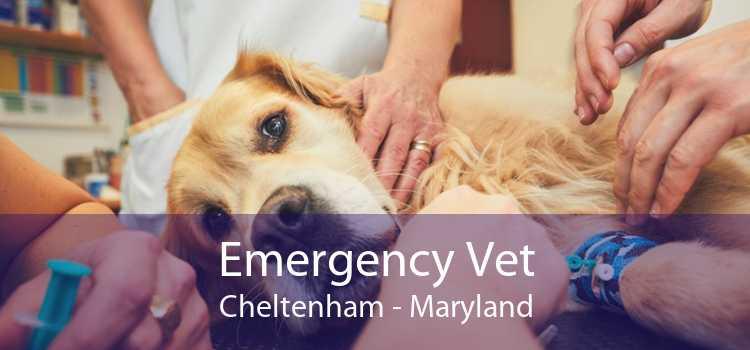 Emergency Vet Cheltenham - Maryland