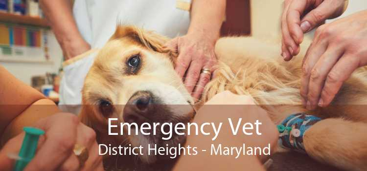 Emergency Vet District Heights - Maryland