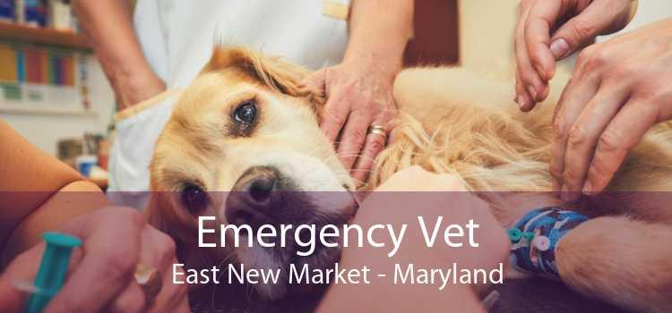 Emergency Vet East New Market - Maryland