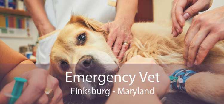 Emergency Vet Finksburg - Maryland