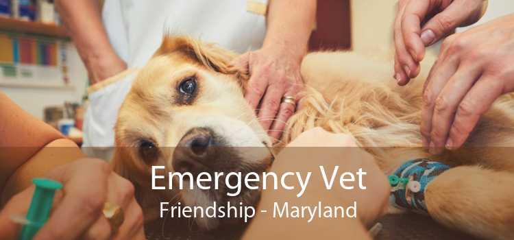 Emergency Vet Friendship - Maryland