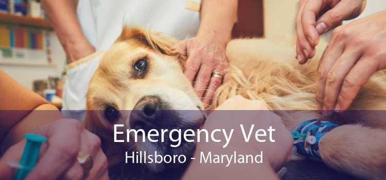 Emergency Vet Hillsboro - Maryland