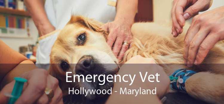 Emergency Vet Hollywood - Maryland