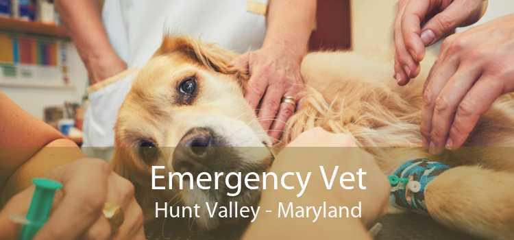 Emergency Vet Hunt Valley - Maryland