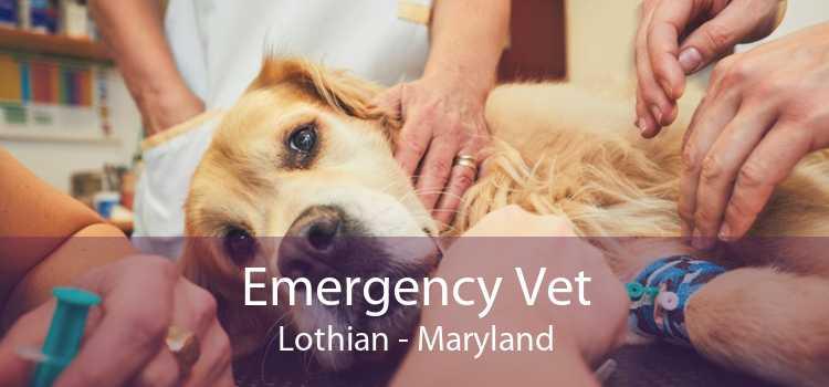Emergency Vet Lothian - Maryland