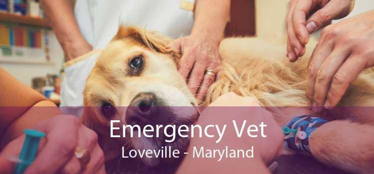 Emergency Vet Loveville - Maryland